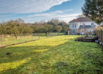 Thumbnail 4 bed semi-detached house for sale in Boxted, Colchester, Essex