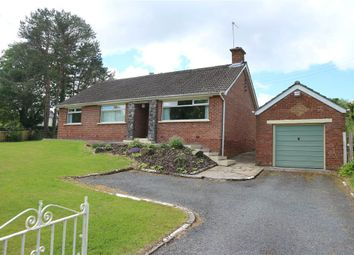 Thumbnail 3 bed terraced bungalow to rent in 173, Church Road, Holywood