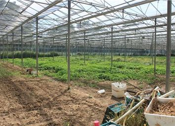 Thumbnail Farm for sale in Staplehurst Road, Marde Tonbridge