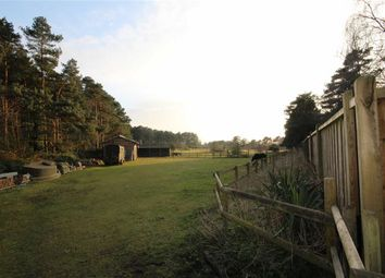 Thumbnail 3 bed detached bungalow for sale in Hurn Road, St Leonards, Dorset