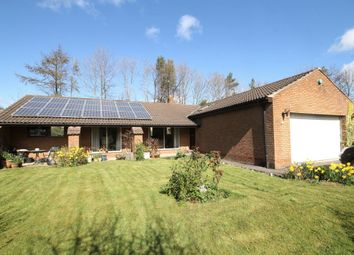 Thumbnail 3 bed bungalow for sale in Forest Drive, Rickleton, Washington