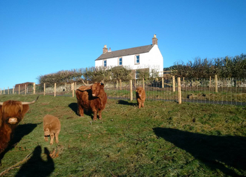 Thumbnail 4 bed property to rent in Westfield Farm, Alyth