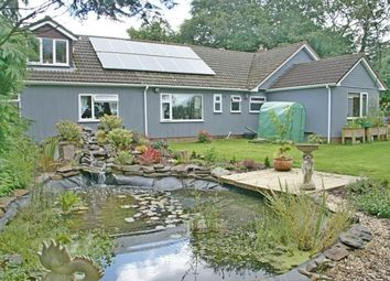 Thumbnail 7 bed bungalow for sale in Honiton, Devon
