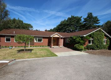 Thumbnail 5 bedroom detached bungalow to rent in Barnsfield Road, St. Leonards, Ringwood