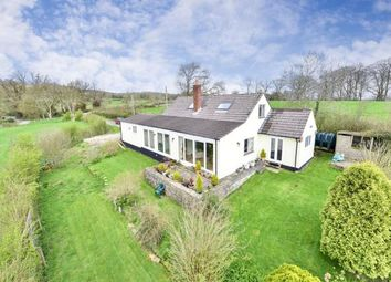 Thumbnail 3 bedroom bungalow for sale in Wells, Somerset, England
