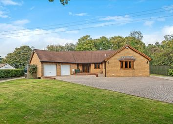 Thumbnail 3 bed detached bungalow for sale in Charmouth Road, Axminster, Devon