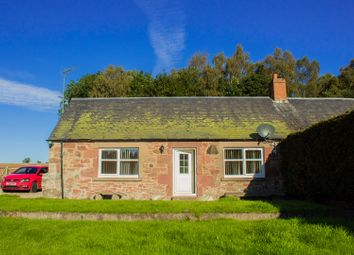 Thumbnail 1 bed semi-detached bungalow to rent in Ardler, Blairgowrie