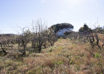 Thumbnail Property for sale in Carvalhal, 2540, Portugal