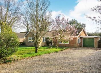 Thumbnail 4 bed detached bungalow for sale in The Fairstead, Scottow, Norwich