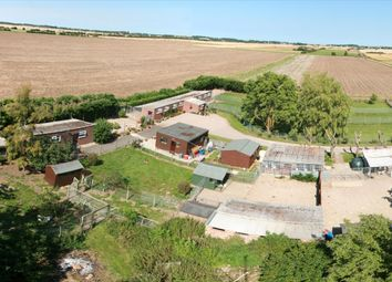 Thumbnail 3 bed property for sale in Kennels, Cattery & Equestrian Businesses LN11, Grainthorpe, Lincolnshire