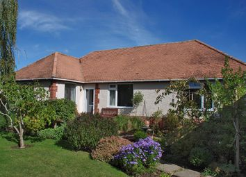 Thumbnail 4 bedroom detached bungalow for sale in Elm Avenue, Pennington, Lymington