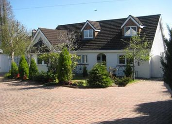 Thumbnail 4 bed detached bungalow for sale in Llechryd, Cardigan