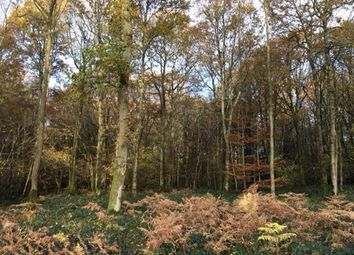 Thumbnail Property for sale in Woodland, Milland Road, Peteresfield
