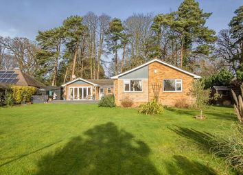 4 bed bungalow for sale in Wroxham, Norwich, Norfolk NR12