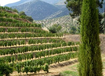 Thumbnail Farm for sale in 245Ha Farm In The Upper Douro, Portugal, Vila Nova De Foz Côa, Guarda, Central Portugal
