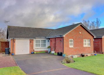 Thumbnail 3 bed detached bungalow for sale in Hardthorn Meadows, Dumfries