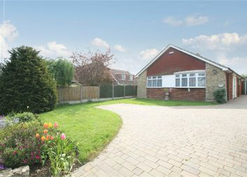 Thumbnail Detached bungalow for sale in Joy Lane, Seasalter, Whitstable