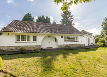Thumbnail 3 bed detached bungalow for sale in St Leonards, Ringwood, Hampshire