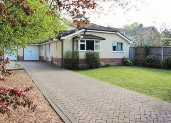 Thumbnail 4 bed detached bungalow to rent in Mallard Road, Colehill
