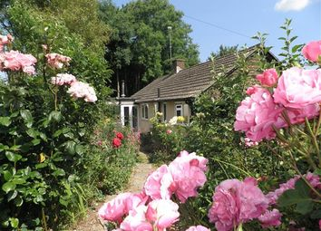 Thumbnail Bungalow for sale in Thornicombe Hill, Thornicombe, Blandford Forum