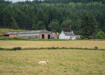 Thumbnail Farm for sale in Botriphnie, Keith