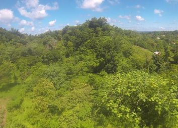 Thumbnail Farm for sale in Maggotty, St Elizabeth, Jamaica
