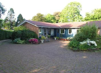 Thumbnail 3 bed detached bungalow to rent in Glencart Grove, Kilbarchan, Johnstone, Renfrewshire