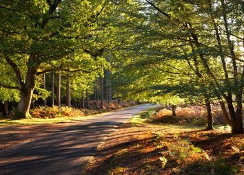 Thumbnail 10 bed cottage for sale in Brockenhurst/Burley Border, The New Forest National Park