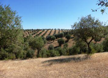 Thumbnail Farm for sale in Farm With 17 Hectares In Alentejo, Avis, Portalegre, Alentejo, Portugal