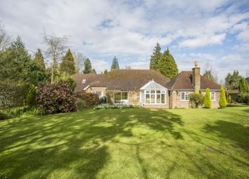 Thumbnail 4 bed bungalow for sale in Little London Road, Horam, Heathfield, East Sussex