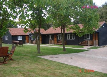 Thumbnail 3 bed semi-detached bungalow to rent in Poole Street, Great Yeldham, Halstead