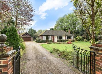 Thumbnail 3 bed bungalow to rent in The Spinney, Sunningdale