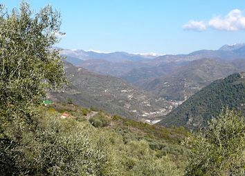 Thumbnail Land for sale in Località Aria Fina - Da 65, Dolceacqua, Imperia, Liguria, Italy