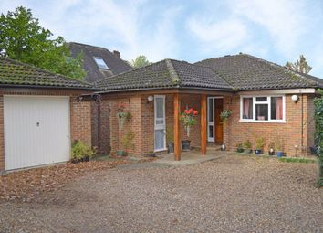 Thumbnail 6 bed bungalow to rent in Hampton Road, Twickenham