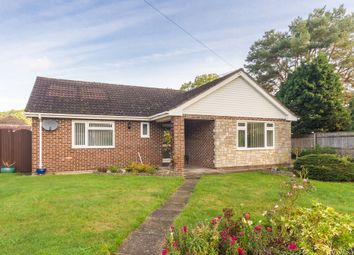 Thumbnail 3 bed detached bungalow for sale in St Ives, Ringwood, Hampshire