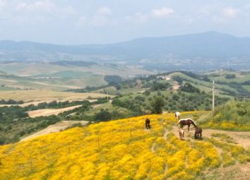 Thumbnail Farm for sale in Tuscany, Italy, Tuscany, Italy