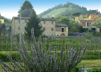 Thumbnail 5 bed detached house for sale in Capannori, Lucca, Tuscany, Italy