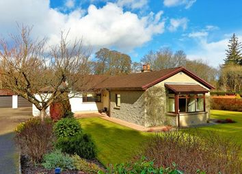 Thumbnail 4 bed bungalow to rent in Banchory