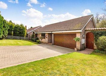 Thumbnail 4 bed bungalow to rent in Little Lane, Aycliffe, Newton Aycliffe