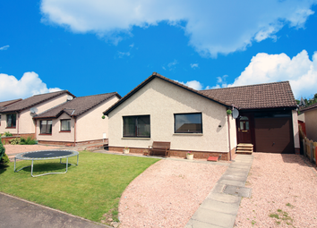 Thumbnail 4 bedroom detached bungalow for sale in Honeyberry Dr, Blairgowrie