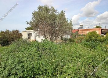 Thumbnail 4 bed bungalow for sale in Timi, Paphos, Cyprus