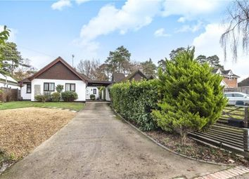 Thumbnail 4 bed detached bungalow for sale in Soldiers Rise, Finchampstead, Wokingham