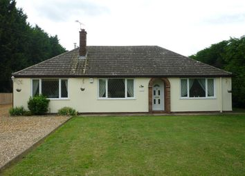 Thumbnail 3 bed bungalow to rent in Drift Road, Lakenheath, Brandon