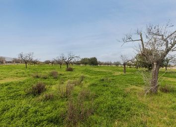 Thumbnail Land for sale in Spain, Mallorca, Sencelles, Biniali