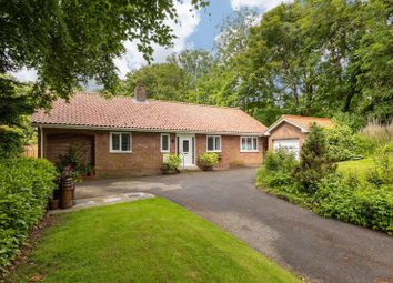 Thumbnail 4 bed detached bungalow for sale in Back Street, Wold Newton, Driffield