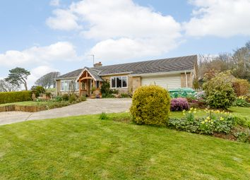 Thumbnail 3 bed bungalow for sale in Little Hayes, Broadwindsor, Dorset