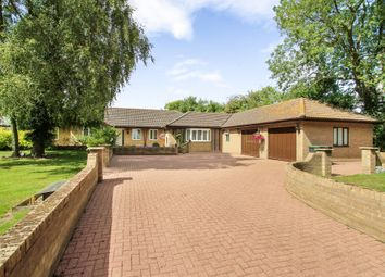 Thumbnail 5 bedroom detached bungalow for sale in Rattlesden, Bury St Edmunds, Suffolk