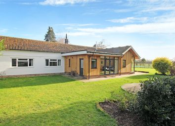 Thumbnail 4 bed detached bungalow for sale in Mereside, Brooke, Norwich, Norfolk
