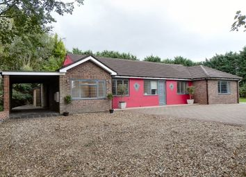 Thumbnail 5 bed detached bungalow to rent in Stambourne Road, Little Sampford, Saffron Walden