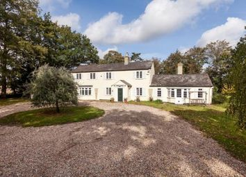 Thumbnail Detached house for sale in Kennett, Newmarket, Cambridgeshire
